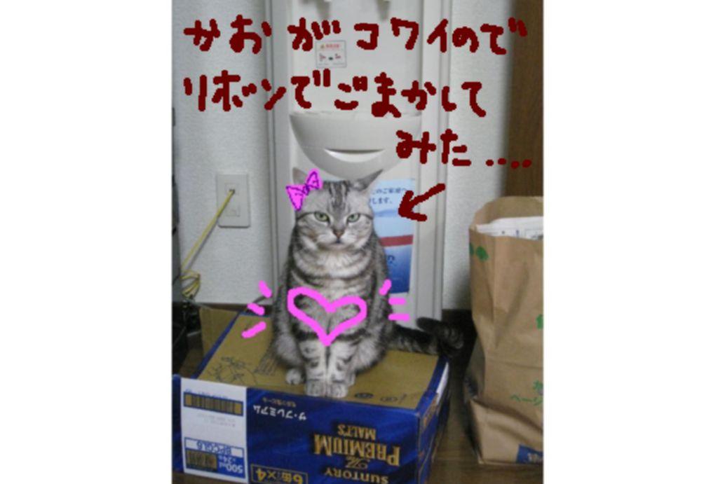 d0132661_1445518.jpg