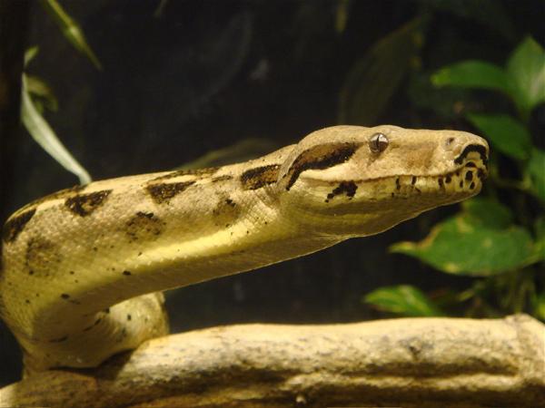 大阪 天王寺動物園。爬虫類を見に行こう。 : Simple Soul
