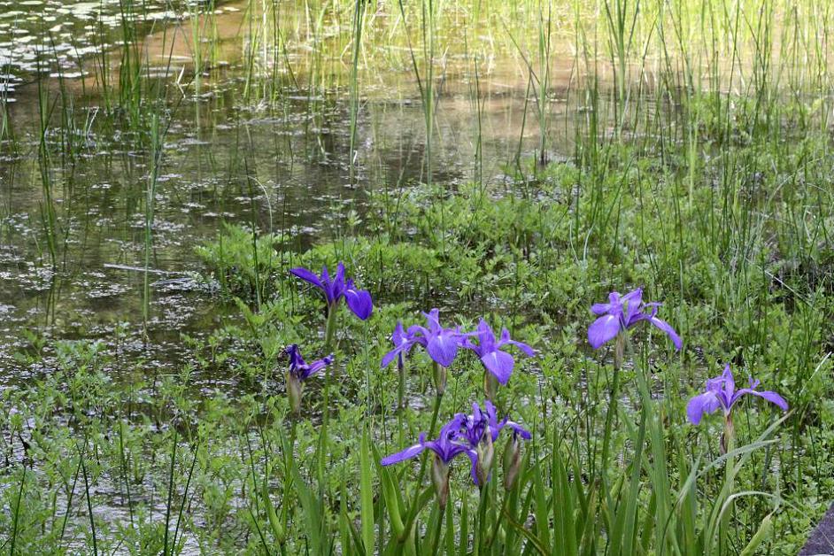 クロスジギンヤンマとギンヤンマ        森林公園_a0107574_093550.jpg