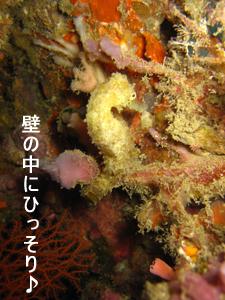 f0144385_20114573.jpg