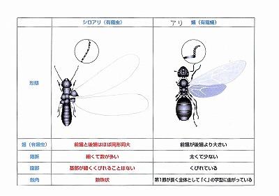 シロアリの季節 (1)_f0059988_1151656.jpg