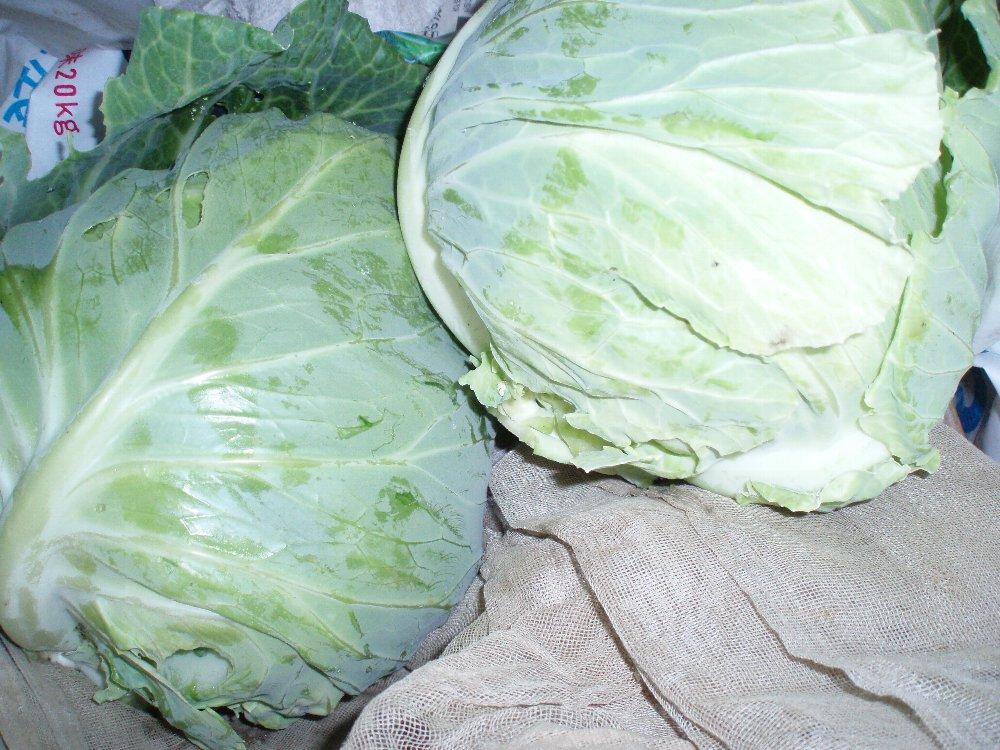 春野菜の収穫_e0087201_2219261.jpg
