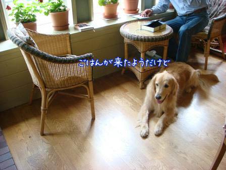 昼食会に五郎も同伴して_f0064906_1922857.jpg