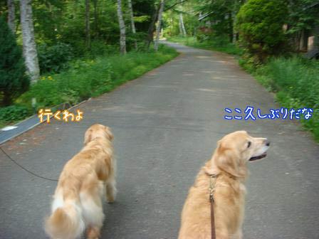 昼食会に五郎も同伴して_f0064906_19375112.jpg