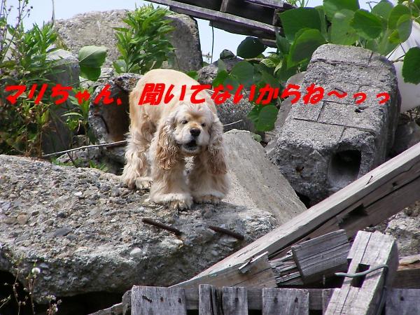 b0067012_0333260.jpg