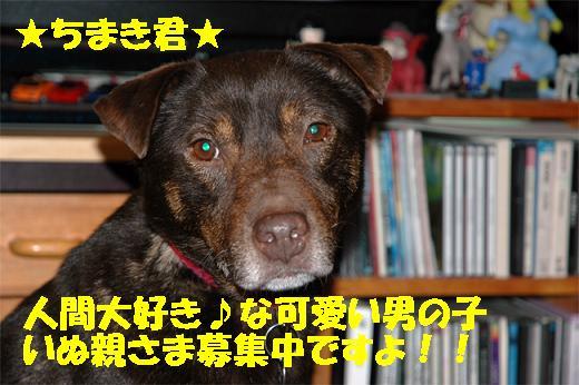 f0121712_1556327.jpg