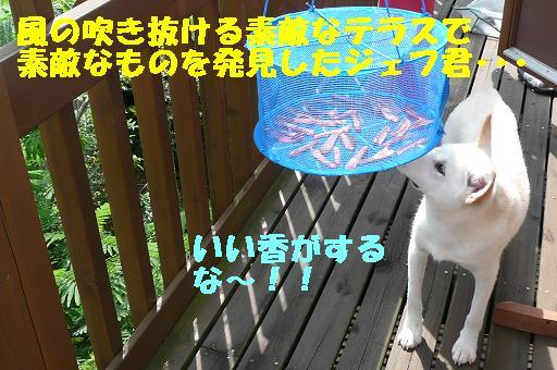 f0121712_15581237.jpg
