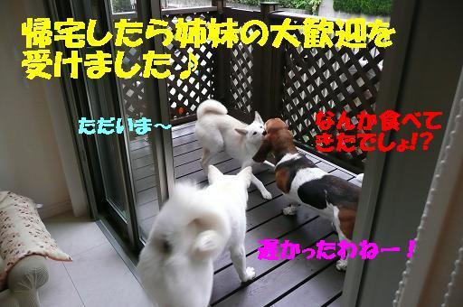 f0121712_15591839.jpg