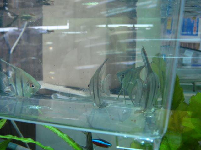 熱帯魚・水草_f0189122_12564279.jpg