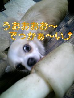f0148927_9595550.jpg