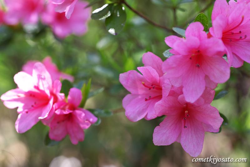 庭の花々_b0179231_11112731.jpg