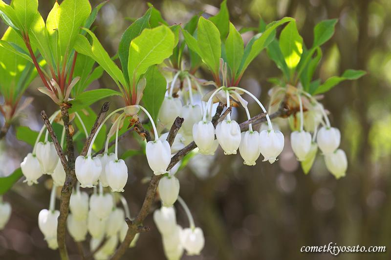 庭の花々_b0179231_11114123.jpg