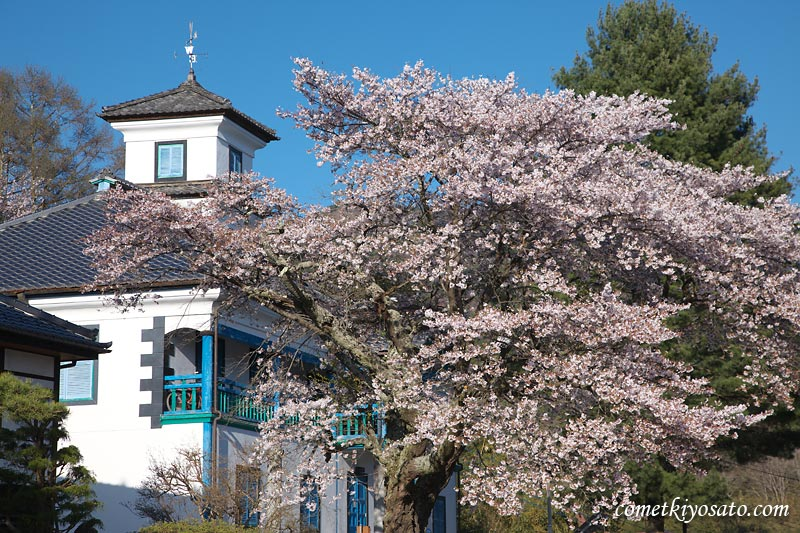 山梨の桜2009 (7) 【北杜市須玉町・大泉町】 桜のシーズンも終盤_b0179231_11292085.jpg