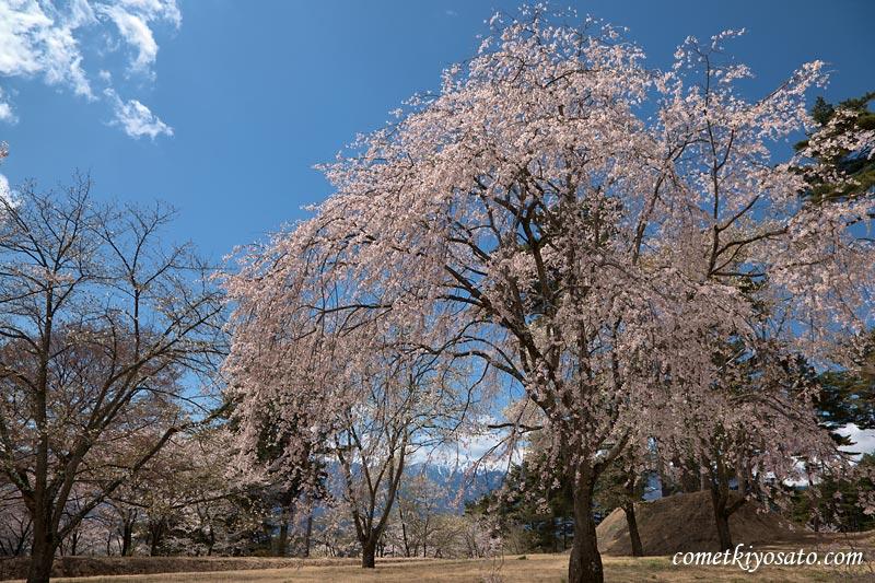 山梨の桜2009 (7) 【北杜市須玉町・大泉町】 桜のシーズンも終盤_b0179231_11294464.jpg