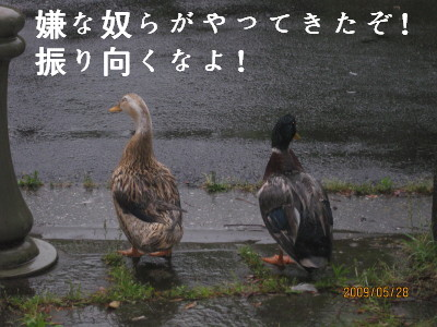 e0121548_22232597.jpg