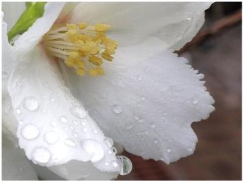 雨上がり~♪_a0089450_2215744.jpg