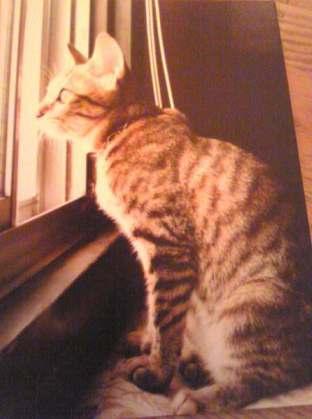 猫_f0196455_16584174.jpg