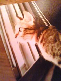 猫_f0196455_173487.jpg