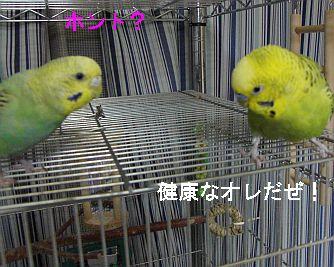 f0196665_093358.jpg