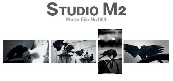 STUDIO M2 Photo File No.064 「騒がしい黒い影 鴉」_a0002672_1881710.jpg