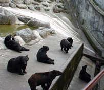 ある日 森の中 クマさん 逃げよう _c0027188_19524987.jpg