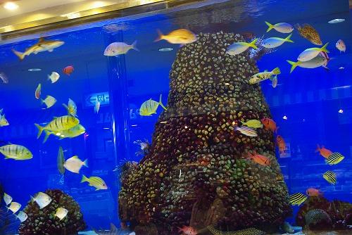 熱帯魚_d0147812_1721182.jpg