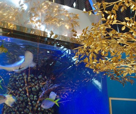 熱帯魚_d0147812_1721399.jpg