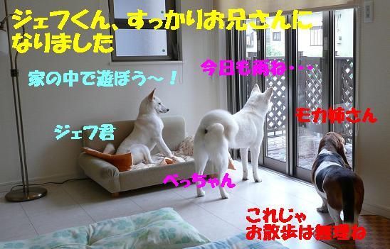 f0121712_11213276.jpg