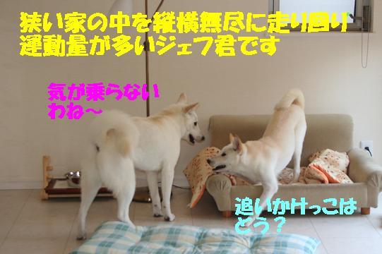 f0121712_11365664.jpg