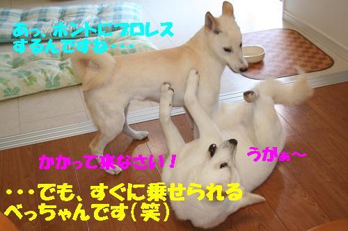 f0121712_113711100.jpg