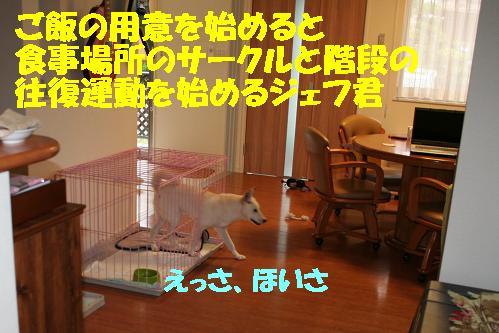 f0121712_1137463.jpg