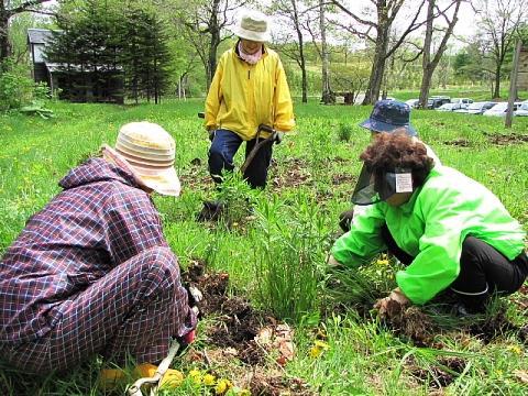 2009年5月29日(金):移植地の草取り実施_e0062415_17264373.jpg