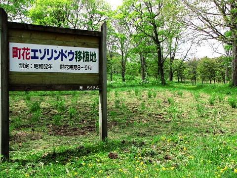 2009年5月29日(金):移植地の草取り実施_e0062415_17265550.jpg