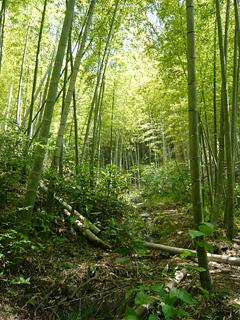 伊豆の南部で タケノコを掘る_c0053520_212395.jpg