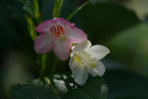 花便り_d0150720_106132.jpg