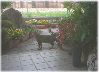 猫の通り道_c0058727_831846.jpg