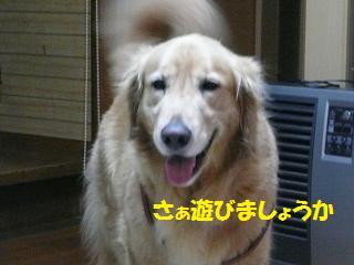 f0114128_20413536.jpg