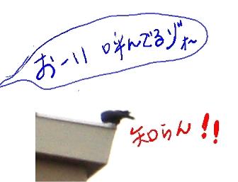 b0165336_1821389.jpg
