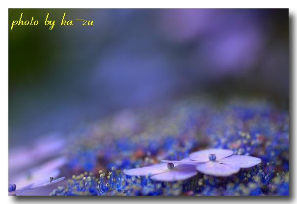 b0180042_20113057.jpg