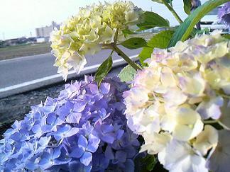 夏物アイテム_e0126460_19565399.jpg