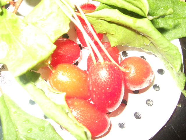 菜園!サイエンス。_c0128487_18512029.jpg