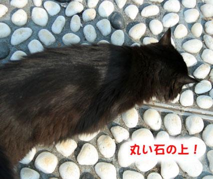 ゴマの足ツボ健康法_d0071596_1029867.jpg
