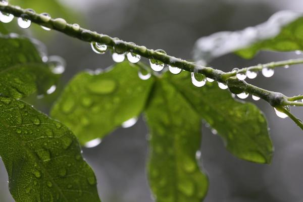 雨が続きます・・・。_d0130714_224221.jpg
