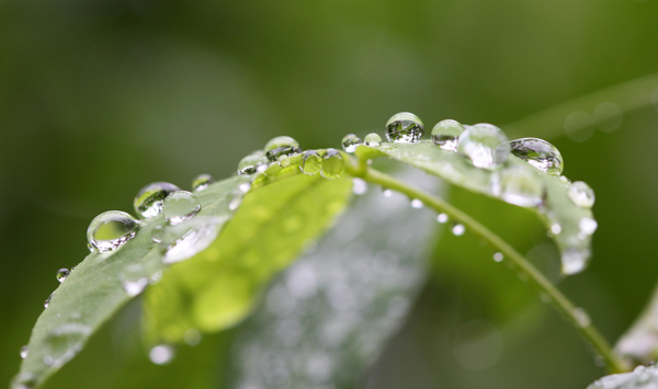 雨が続きます・・・。_d0130714_2243546.jpg
