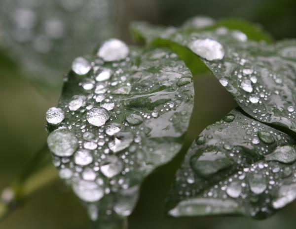 雨が続きます・・・。_d0130714_2244549.jpg