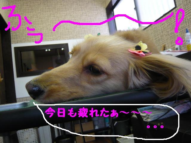 はなまる&うれし!&リボン♪_b0130018_8142755.jpg