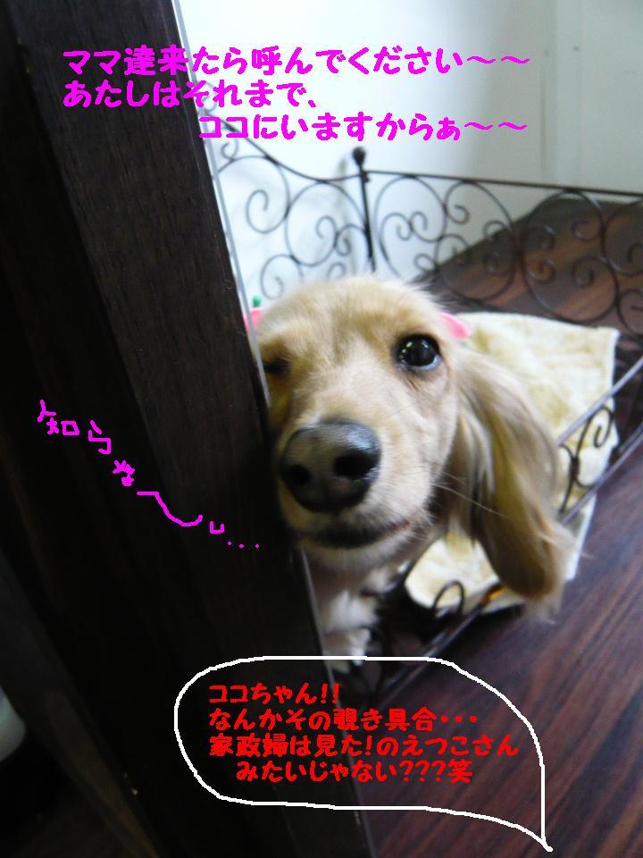 はなまる&うれし!&リボン♪_b0130018_8145232.jpg