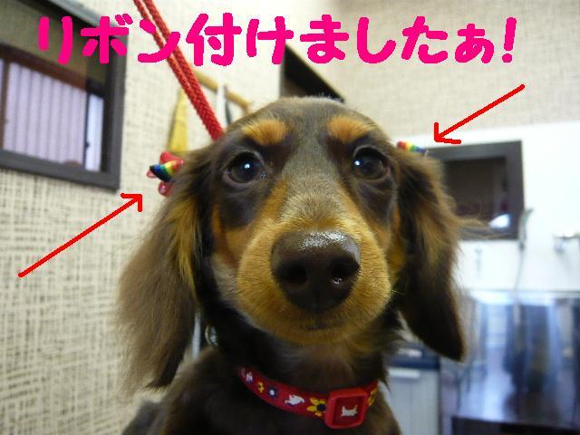 はなまる&うれし!&リボン♪_b0130018_8172563.jpg