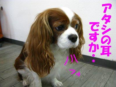 b0185323_1553125.jpg