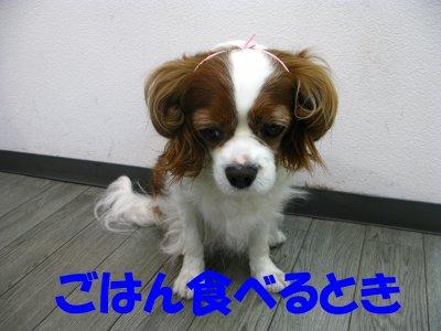 b0185323_1559074.jpg